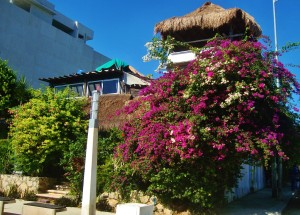 house playa del carmen mexico flowers