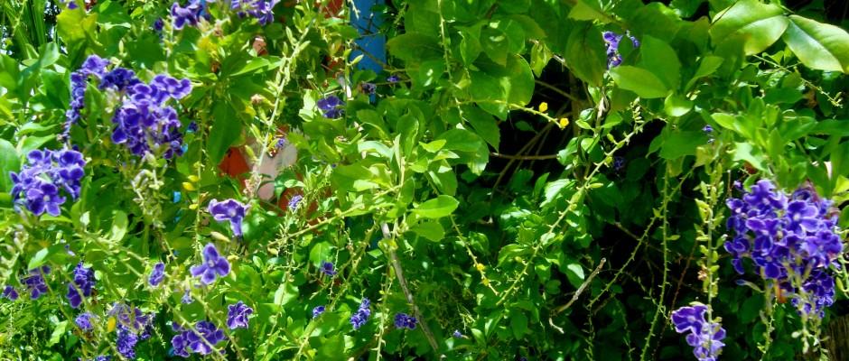 blue purple flowers playa del carmen tropical