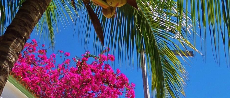 Playa Del Carmen flowers and tree