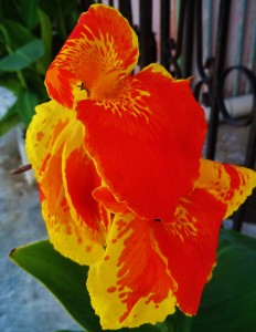 flower playa del carmen mexico
