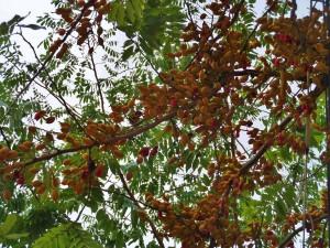 Playa Del Carmen, tree
