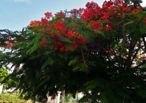 Flowers, trees playa del carmen