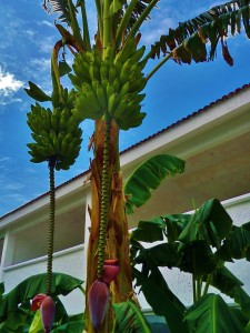 banana tree, playa del carmen