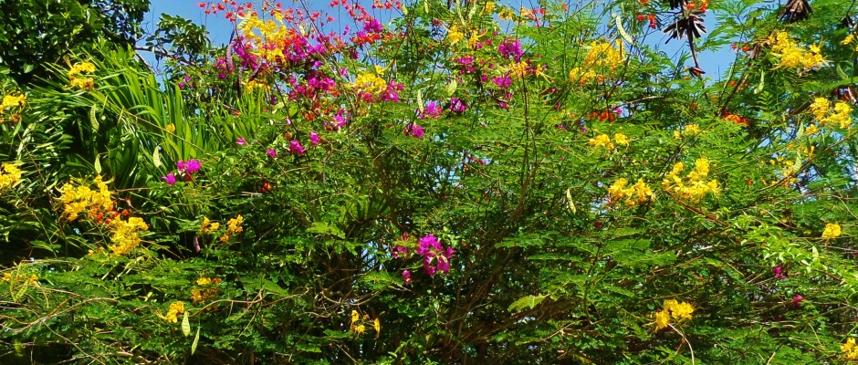 Flowers bush Playa del Carmen