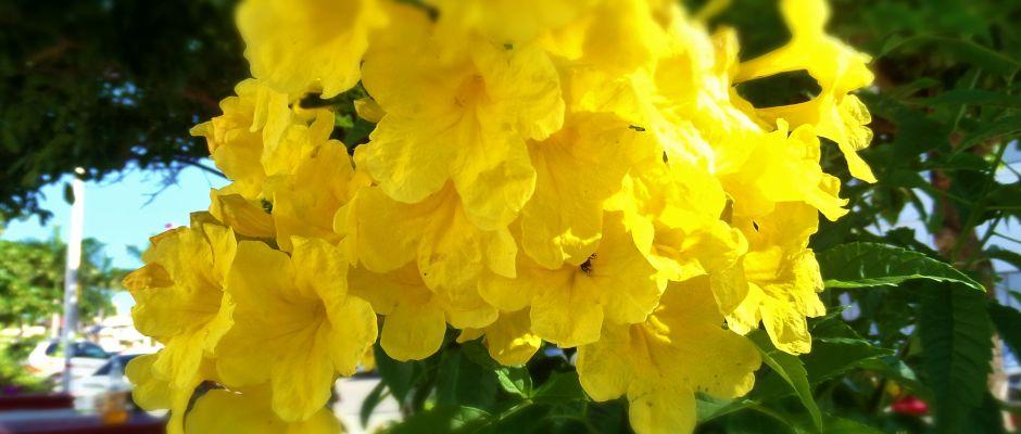 Flowers in Playa Del Carmen