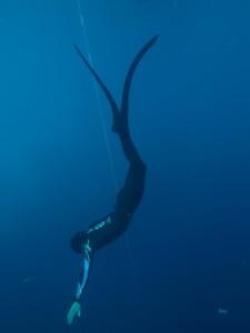 Free diving playa del carmen