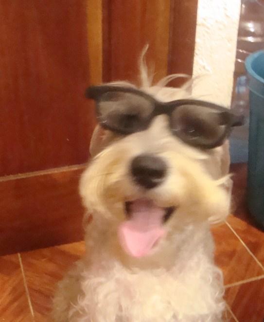 A real Playa Del Carmen dog wears glasses.