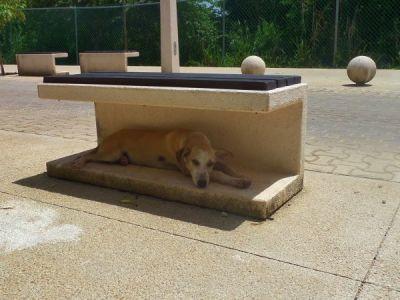 Dogs in Playa Del Carmen