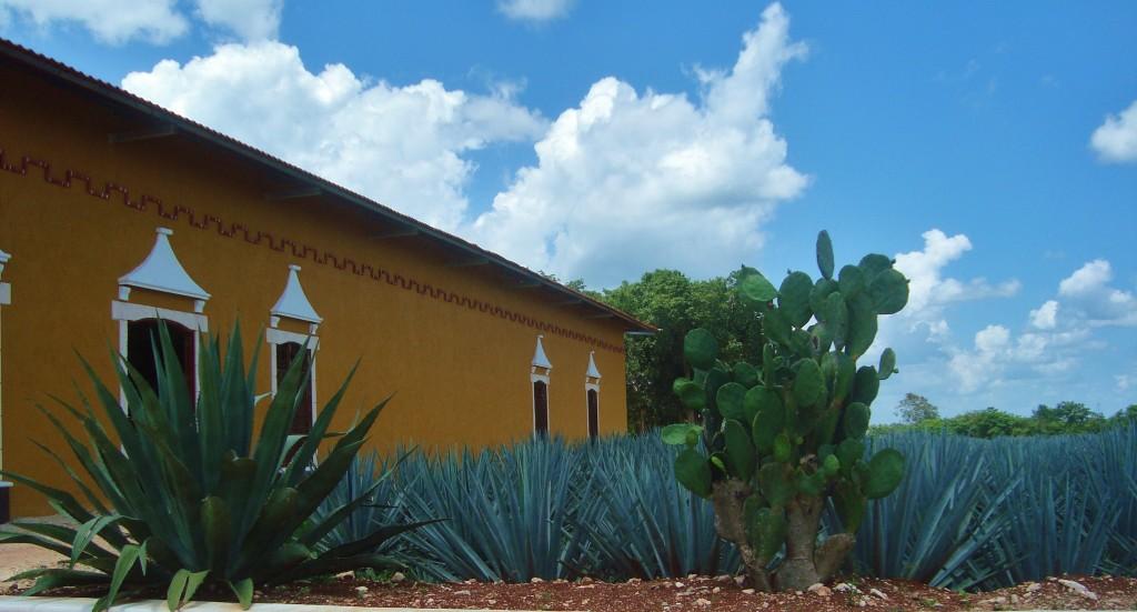 Mayapan tequila tour Valladolid yucatan