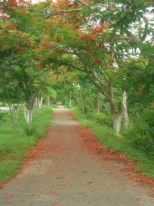 Valladolid yucatan bike path cycling