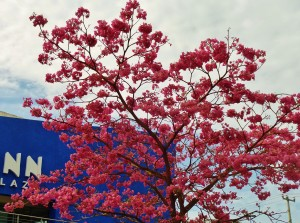 Tree, Playa Del carmen, flowers