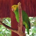 Xaman-Ha Bird Sanctuary in Playa Del Carmen Playacar