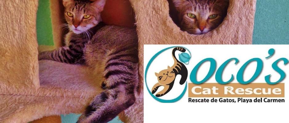 Coco's Cat rescue Playa Del Carmen