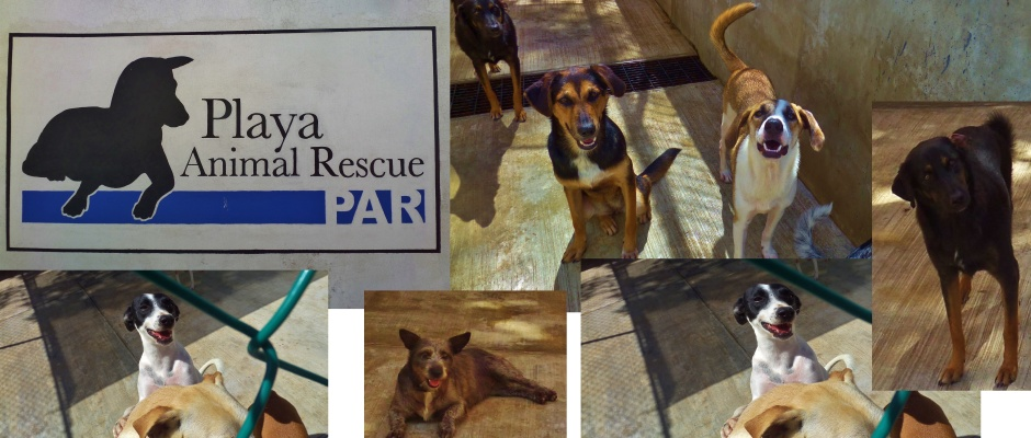 Playa Animal Rescue in Playa Del Carmen