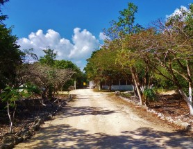 Best cenote to visit el jardin del eden playa del carmen for El jardin del eden