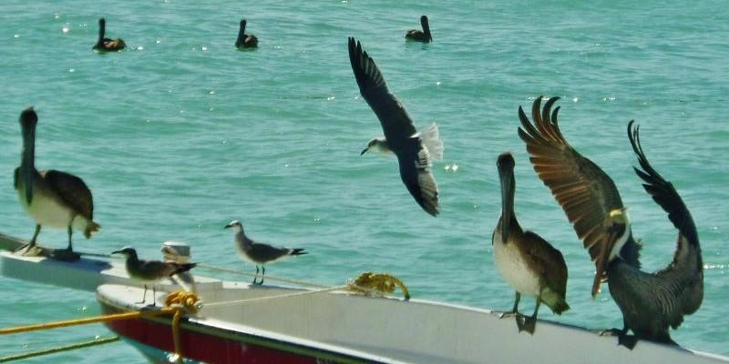 Animals of the Riviera Maya