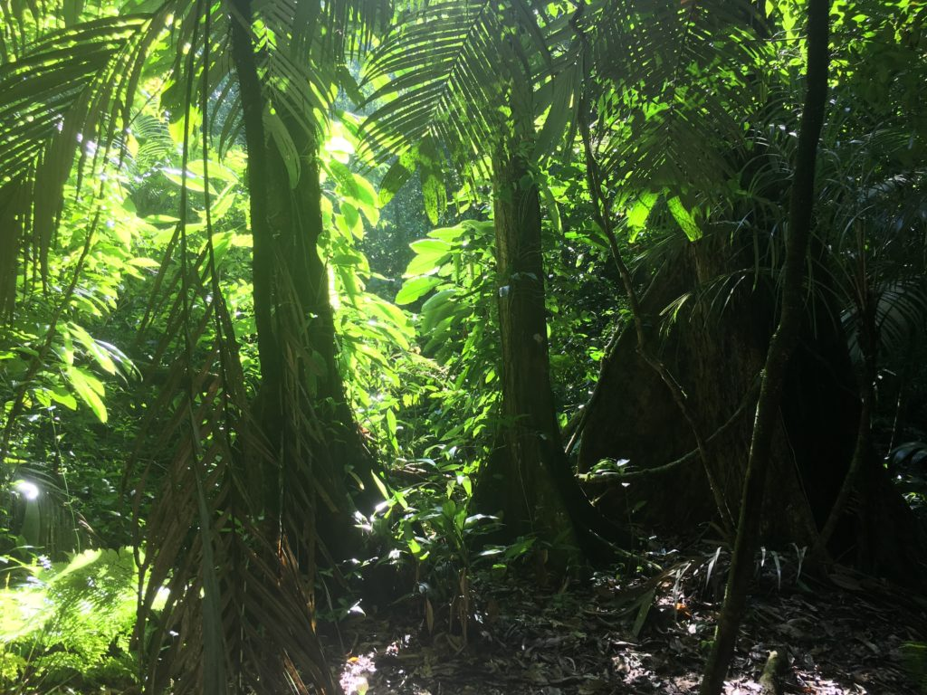 Jungle trekking to find Mayan Ruins in Mexico