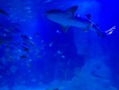 Playa Del Carmen aquarium