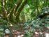 El Naranjal Mayan Ruins Mexico