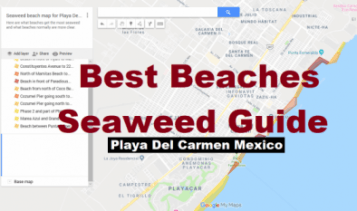 What beaches in Playa Del Carmen have less seaweed?