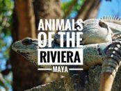 Riviera Maya animals