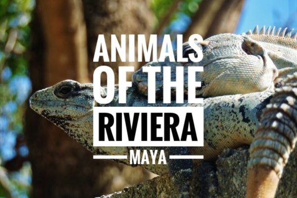 Riviera Maya animals